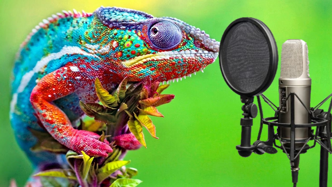 Chameleon and Microphone